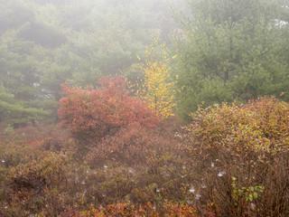 Autumn woodland in fog, close up,