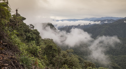 Cloud Forest Overview, Ecuador