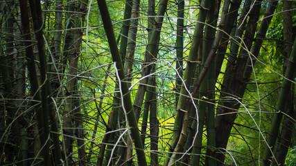 bamboo wild messy