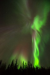 Angel of Northern Lights - Angel-shape of northern lights rise above alpine forest into the starry sky.