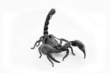 Scorpion Chang.