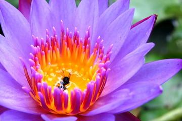 Lotus flower / OLYMPUS DIGITAL CAMERA