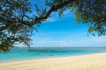 Green tree over tropical beach.