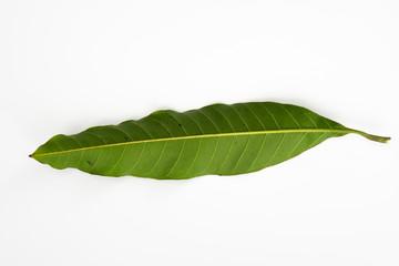 Mango leaf isolated with white background