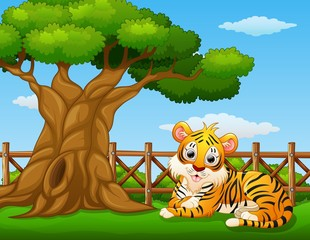 Animal tiger beside a tree inside the fence