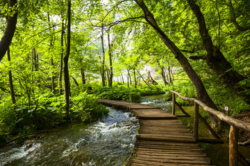 Wall Murals Road in forest Plitvice lakes park in Croatia