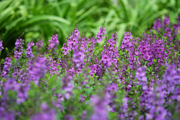background of violet flower