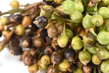 Millet, Adlay, Adlay millet, Job's tears, have medicinal properties.