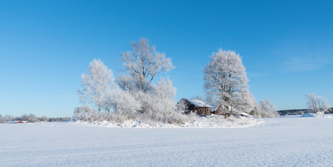 wintry landscape and tree branches covered with white frost