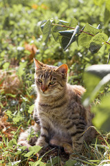 Animal portrait. Cat outdoors. Pet photo