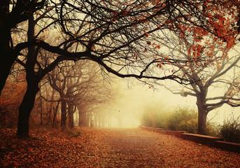 Autumn landscape - foggy autumn Park Wall mural