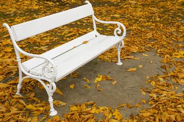 white bench in autumn