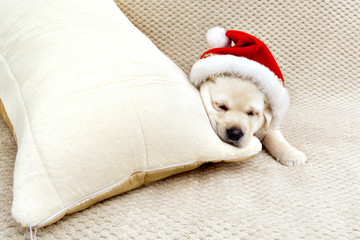 Labrador puppy dressed as Santa Claus sleeping on the edge of th