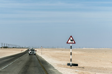 Camel warning sign desert highway in dhofar salalah Oman Middle East