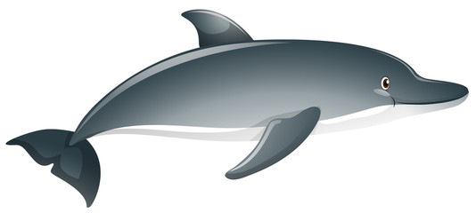 Gray dolphin on white background