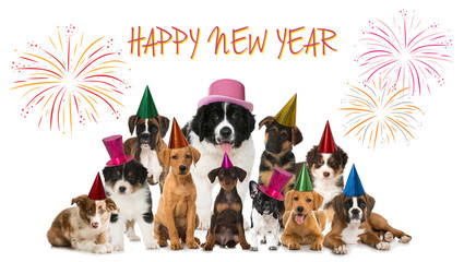 Happy New Year Puppies