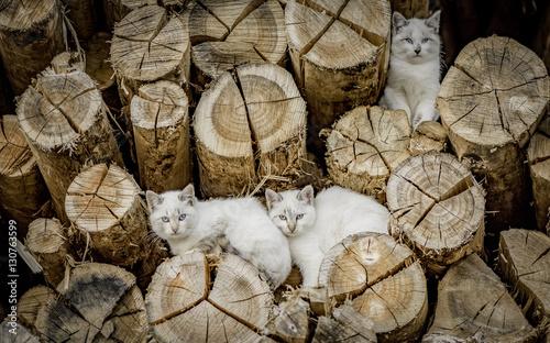 Черно-белый кот на бревнах загрузить