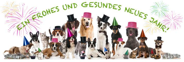 Happy New Year Pets