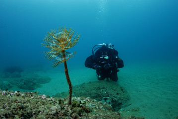 Diver and feather duster worm