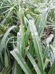 naturaleza invernal