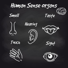Human sense organs icons on chalkboard background. Vector illustration