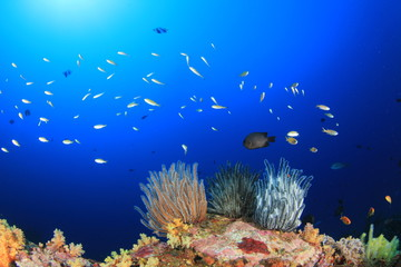 Coral reef underwater with fish in ocean