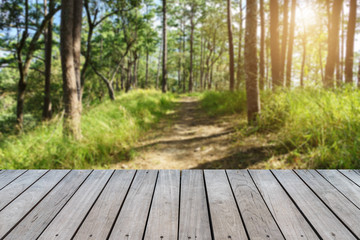 Beautiful Scene forest with wood planks floor