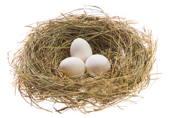 Nest with Easter eggs