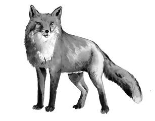 watercolor fox