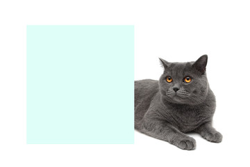 cat with yellow eyes lying about banner