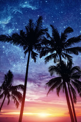 Silhouette of palm trees at sunset and stars