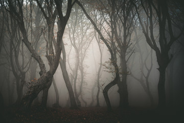 Hoia forest, the haunted forest
