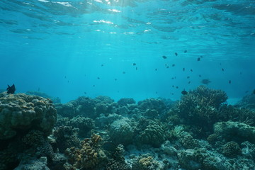 Shallow ocean floor with coral reef and fish, natural scene, Rangiroa lagoon, Pacific ocean, French Polynesia