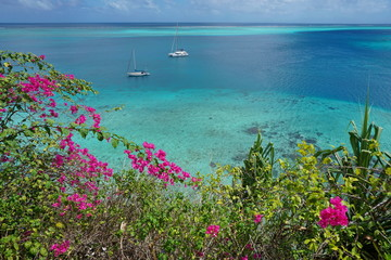 Viewpoint over the lagoon with two boats anchored and bougainvillea flowers in foreground, south Pacific ocean, Huahine island, French Polynesia