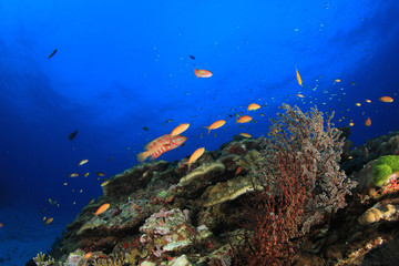 Fish and coral reef in ocean