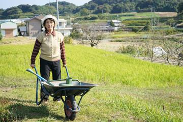 Farmwoking senior person in field