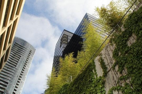 Nature meets the Bellevue, Washington city skyline