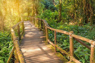 wood bridge in rainforest