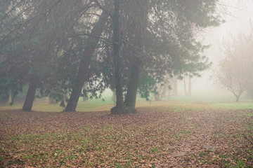 Mist trees and vegetation in a park in autumn
