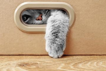 Spoed Fotobehang Kat Cute cat in cardboard box