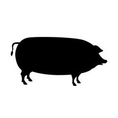 pig vector illustration  black silhouette