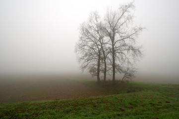 Nebbia in Valle Padania