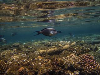 underwater in Hurghada