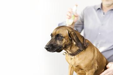 Bavarian Welding Dog at the dog salon