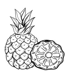 реалистичный эскиз ананас
