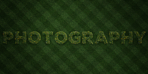 PHOTOGRAPHY - fresh Grass letters with flowers and dandelions - 3D rendered royalty free stock image. Can be used for online banner ads and direct mailers..