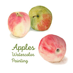 Watercolor apples Illustration