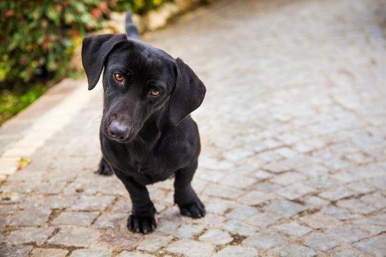 Sguardo canino