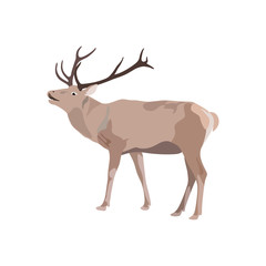 vector illustration of deer with antler on white background.