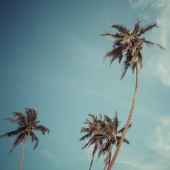 Palm and blue Sky. Palm Beach fashion background